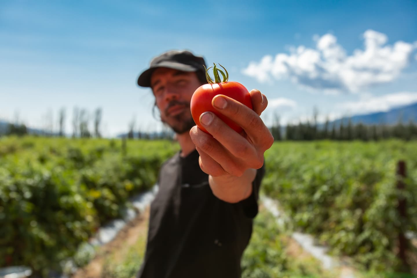 Canadian Farmer holding up a tomato